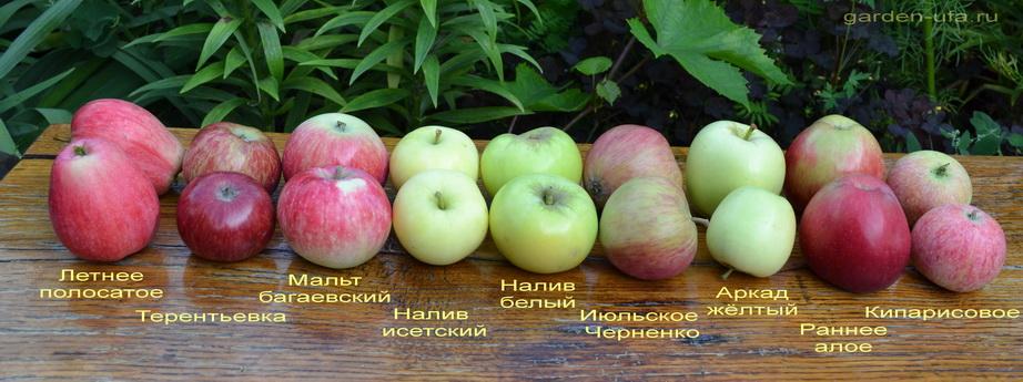 Подарок детям яблоня